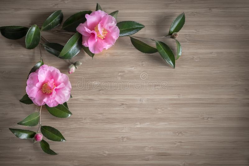 Fleurs de camélia sur le fond en bois photo stock
