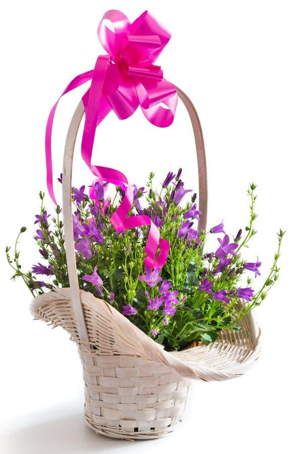 Fleurs de Campanula image stock