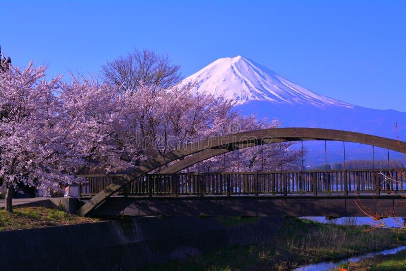 Fleurs de cerise et Mt Fuji de la côte du nord du lac Kawaguchi Japon image stock