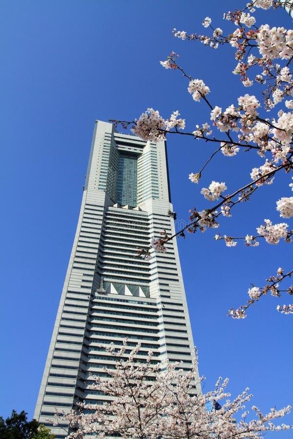 Fleurs de cerisier à l'avenue de dori de Sakura à Yokohama image stock