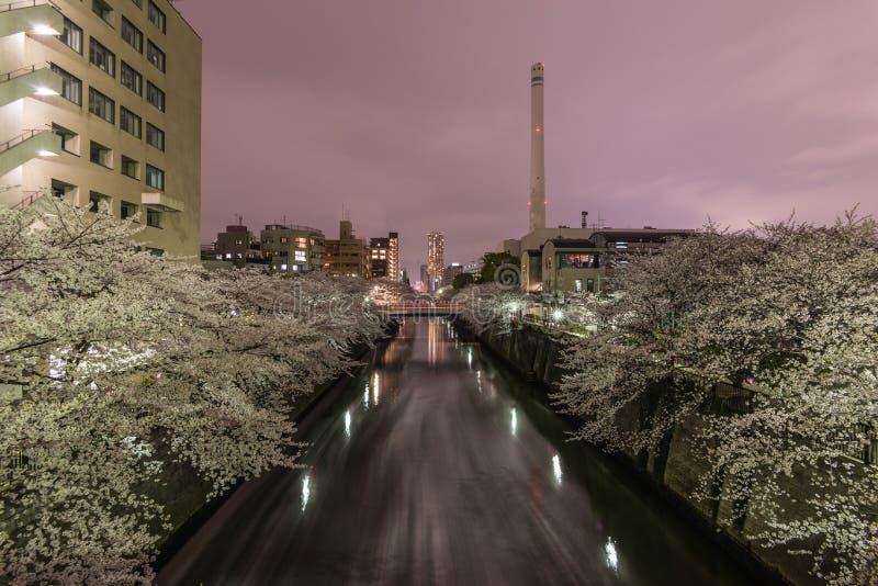 Fleurs de cerisier à Tokyo, Japon images stock