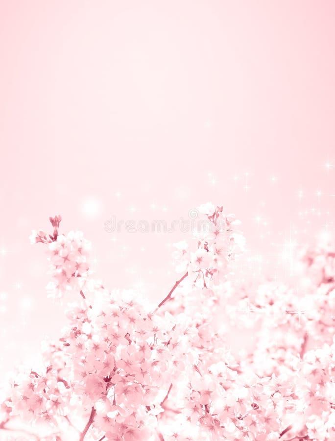 Fleurs de cerisier photos stock