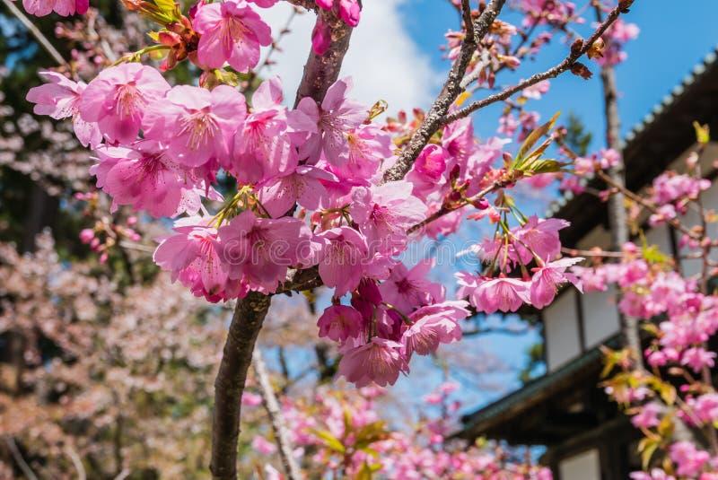 Download Fleurs De Cerisier Au Parc De Château De Hirosaki Image stock - Image du passerelle, scénique: 76088021