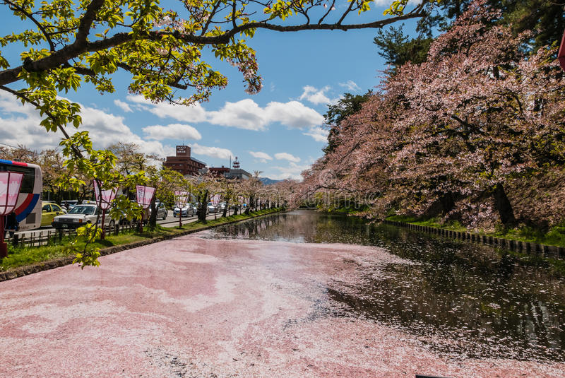 Download Fleurs De Cerisier Au Parc De Château De Hirosaki Photo stock éditorial - Image du passerelle, important: 76088113