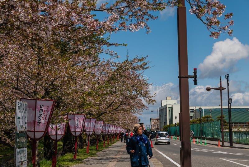 Download Fleurs De Cerisier Au Parc De Château De Hirosaki Photo stock éditorial - Image du ruine, japan: 76088278