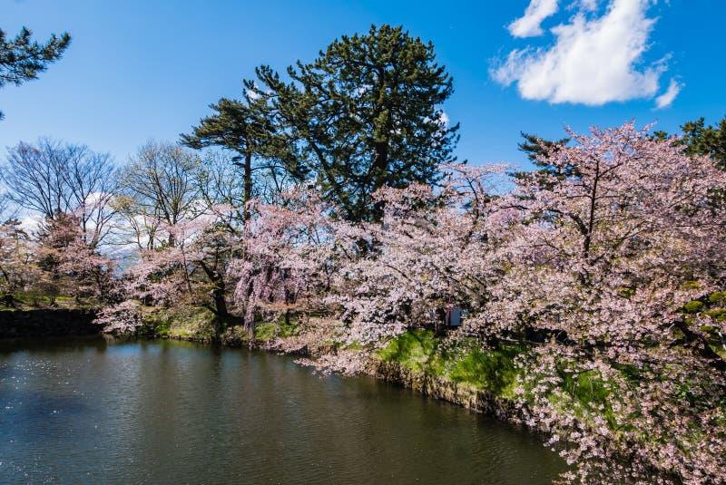 Download Fleurs De Cerisier Au Parc De Château De Hirosaki Photo stock - Image du japan, château: 76089174