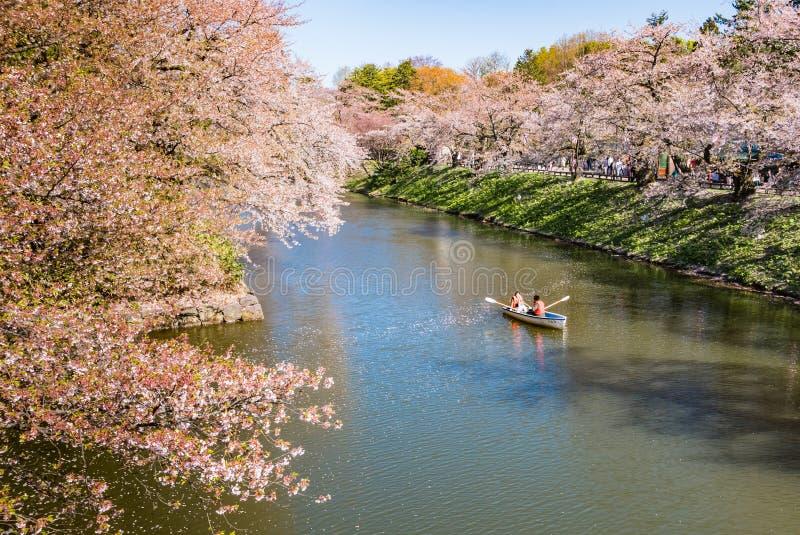 Download Fleurs De Cerisier Au Parc De Château De Hirosaki Photo stock éditorial - Image du ruine, nature: 76089833