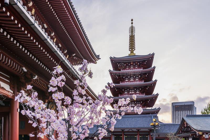 Fleurs de cerisier dans le temple de Senso-JI à Tokyo, Japon au coucher du soleil photos libres de droits