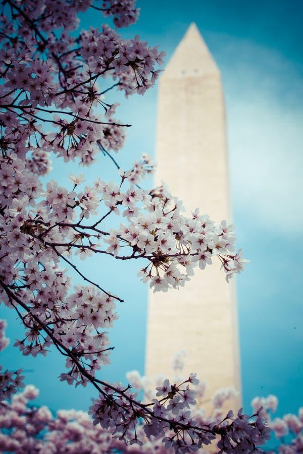 Fleurs de cerisier de Washington DC avec le lac et le Washington Monument photo stock