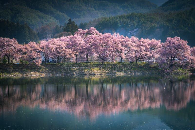 Fleurs de cerisier et ?tang photographie stock