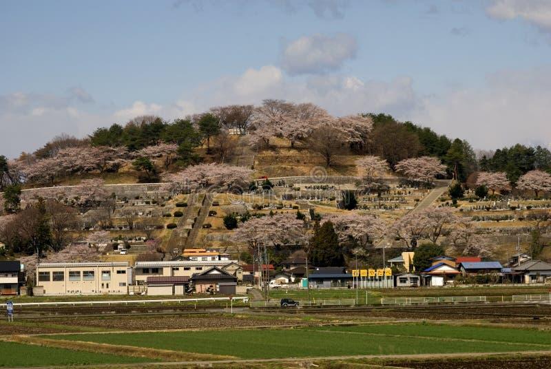 Fleurs de cerisier, Honshu, Japon photo stock