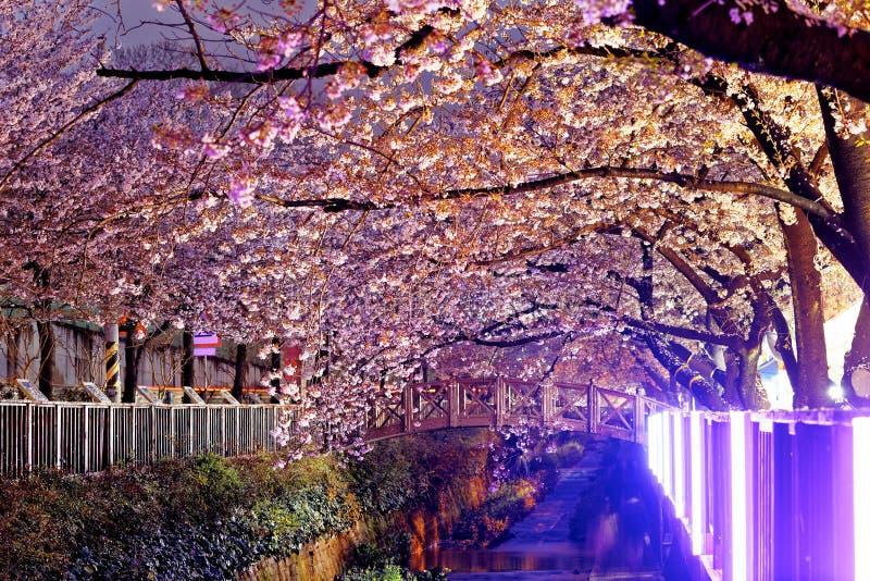 Fleurs de cerisier la nuit photo libre de droits
