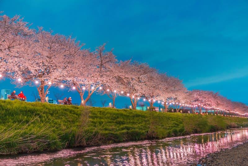 Fleurs de cerisier la nuit images stock