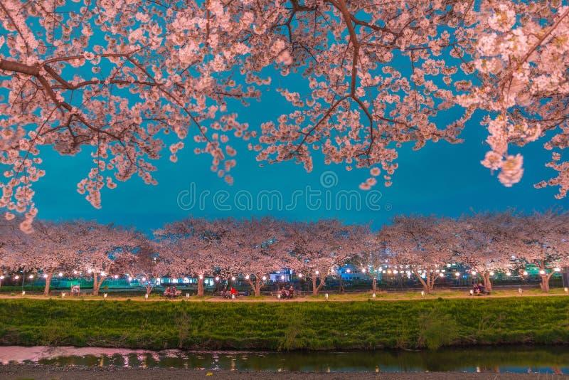 Fleurs de cerisier la nuit photos stock