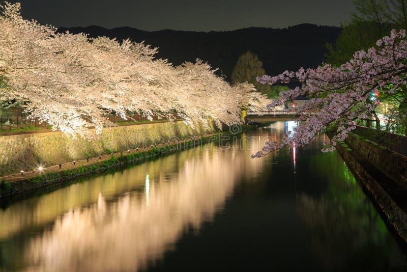 Fleurs de cerisier la nuit, Kyoto par nuit image stock