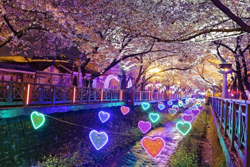 Fleurs de cerisier la nuit, ville de Busan en Corée du Sud images libres de droits