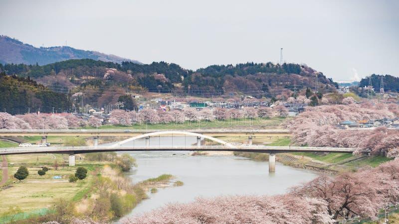 Fleurs de cerisier ou Sakura et rivière photographie stock libre de droits