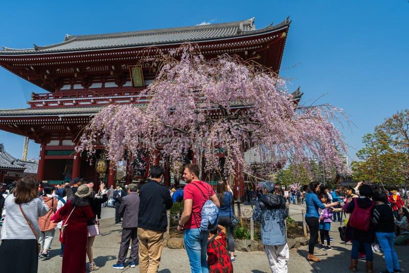 Fleurs de cerisier de ressort ? la porte de Hozomon du temple de Sensoji avec le touriste non identifi?, Tokyo, Japon images stock