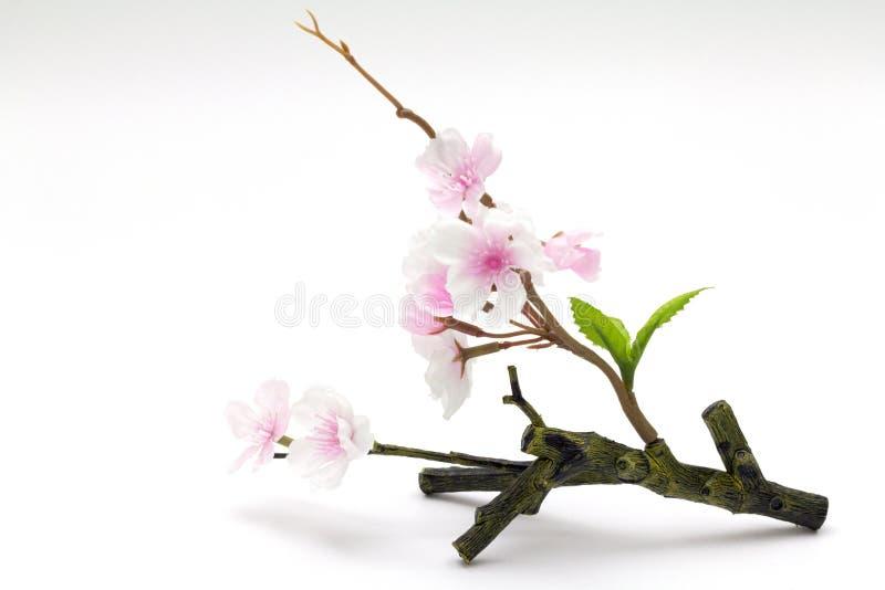 Fleurs de cerisier roses, fleurs de Sakura photos stock