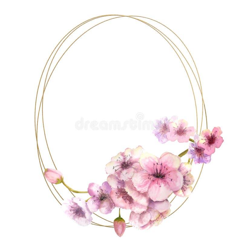 Fleurs de cerisier, Sakura Branch avec les fleurs roses sur le cadre d'or et le fond blanc d'isolement Image de ressort Vue water illustration libre de droits