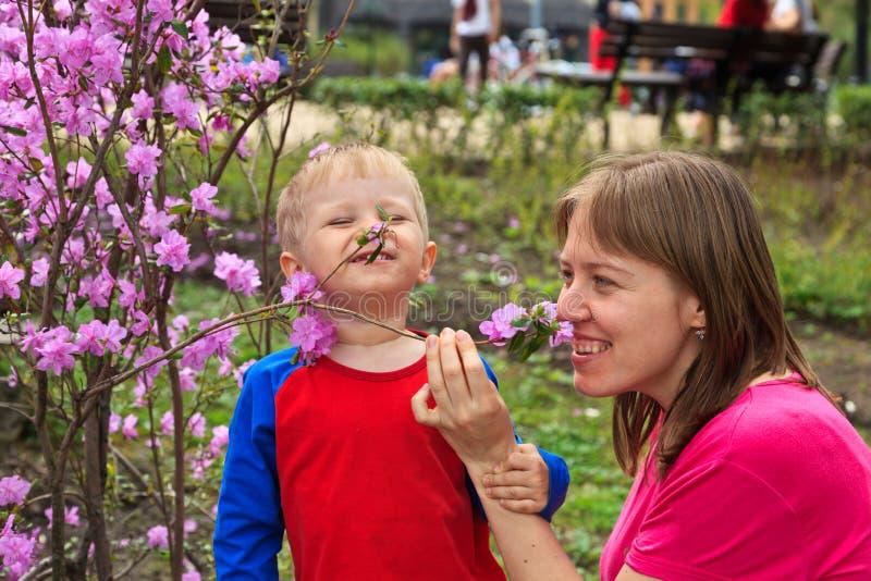Fleurs de cerisier sentantes de famille photos libres de droits