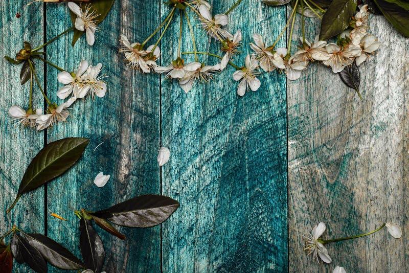 Fleurs de cerisier sur le conseil en bois photo libre de droits