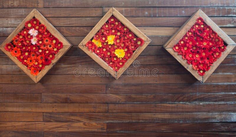 Fleurs de chrysanthème dans le cadre en bois photos libres de droits