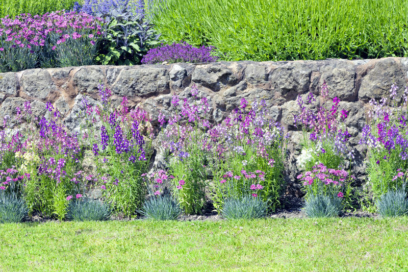 Fleurs de cottage d 39 t dans un jardin anglais photo stock for Jardin de cottage anglais
