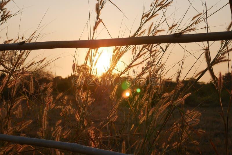 Fleurs de coucher du soleil photos stock