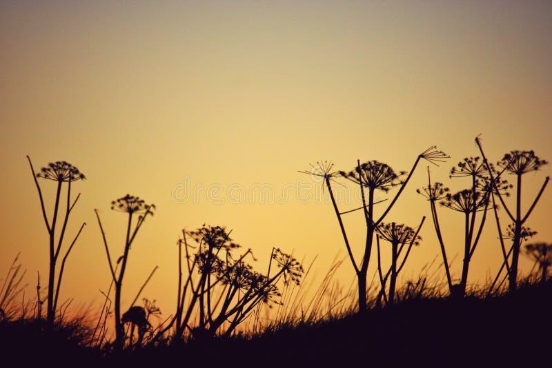 Fleurs de coucher du soleil photo stock