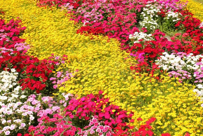 fleurs de couleur trois image stock