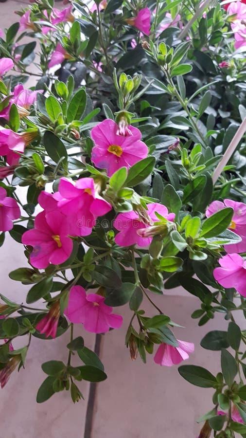 Fleurs de coup images stock
