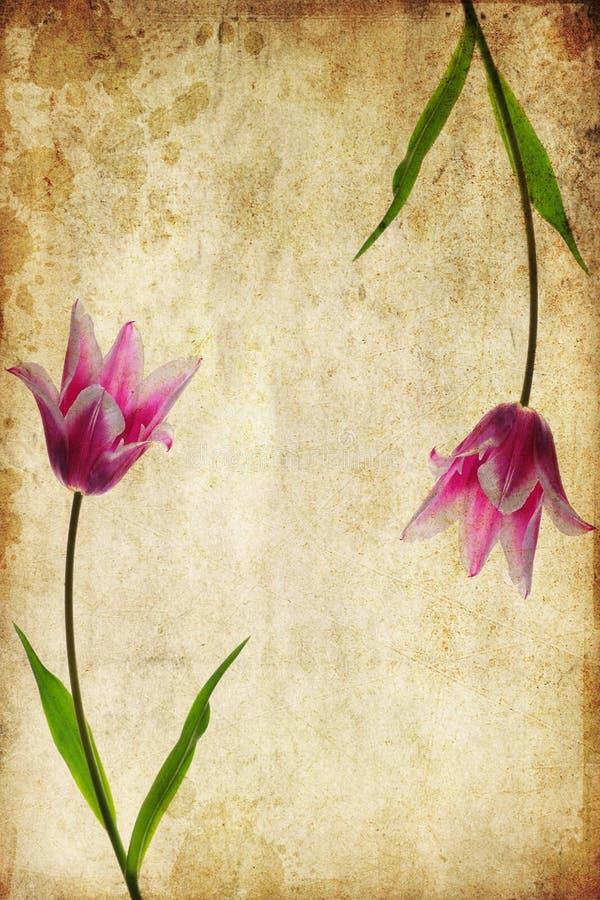 Fleurs de cru photos stock