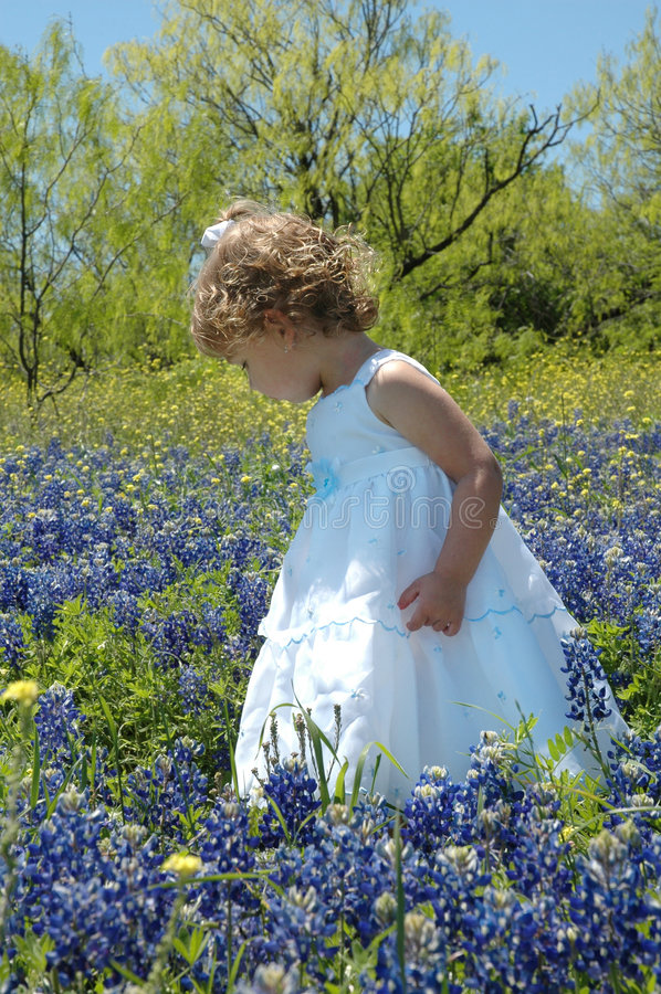 Fleurs de cueillette photographie stock libre de droits