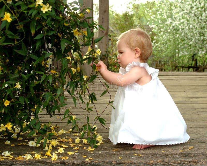 Fleurs de cueillette images stock