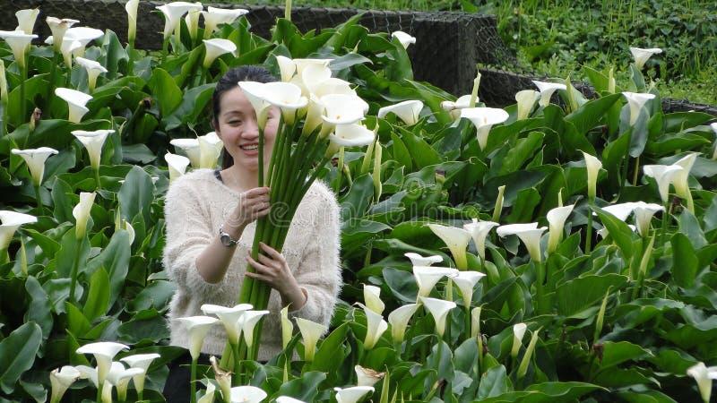 Fleurs de cueillette dans un domaine de zantedeschia photos libres de droits