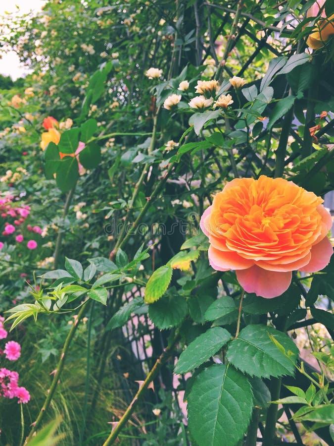 Fleurs de début de l'été photographie stock