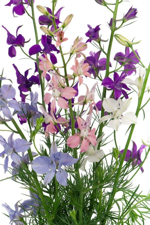 Fleurs de delphinium images stock