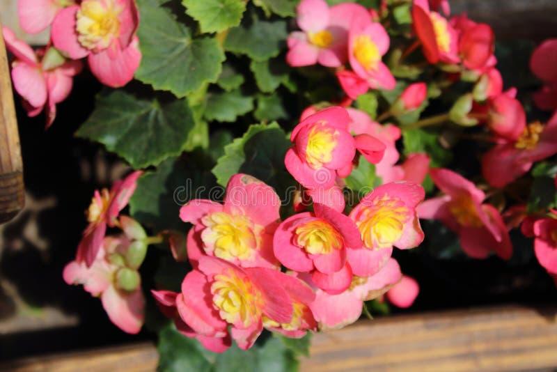 Fleurs de différentes couleurs qui peuvent être employées pour décorer la maison, le bureau et d'autres endroits Ils peuvent égal photographie stock libre de droits