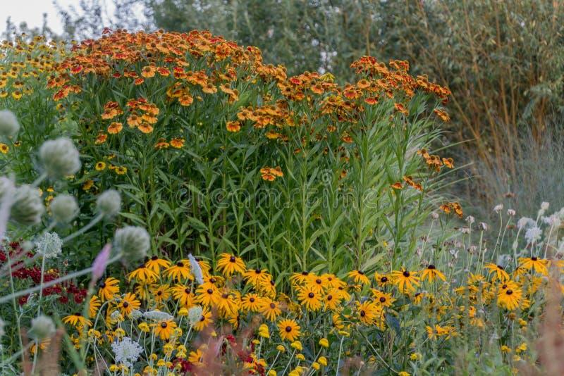 Fleurs de famille de tournesol dans le jardin image libre de droits