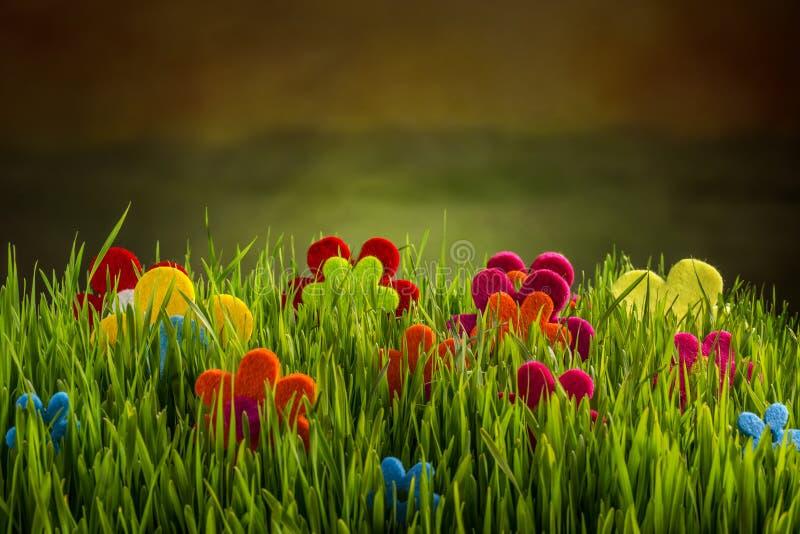 Fleurs de feutre photos libres de droits
