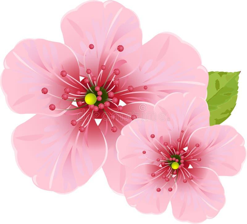 Fleurs de fleur de cerise illustration de vecteur