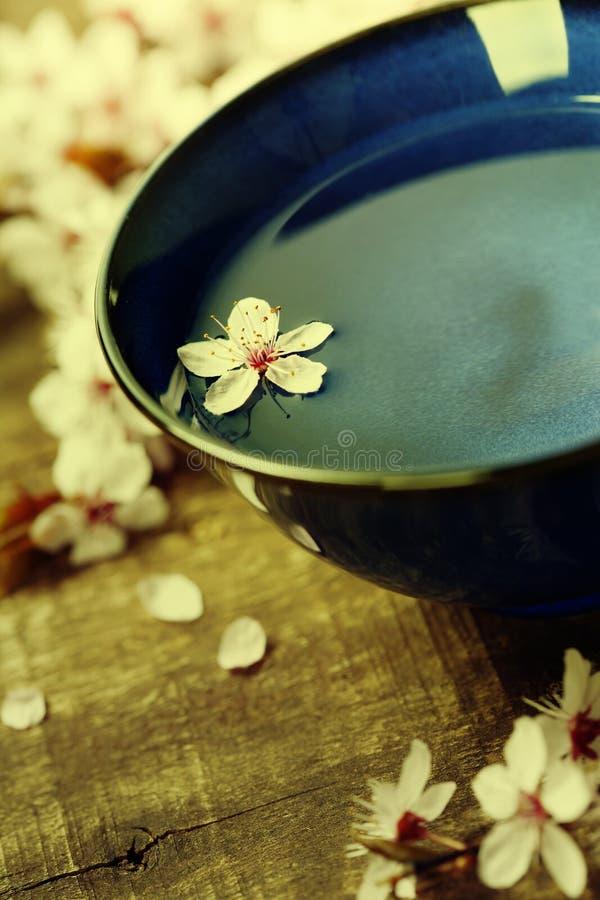 Fleurs de fleurs de cerisier avec la cuvette de l'eau images stock
