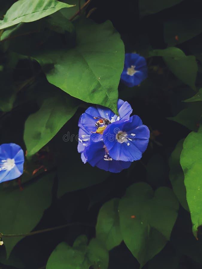 Fleurs de floraison images stock