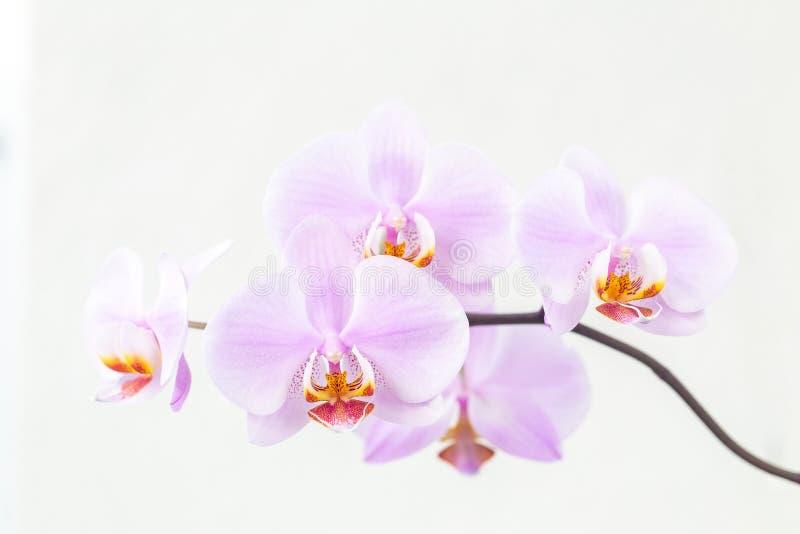 Fleurs de floraison d'orchidée photographie stock