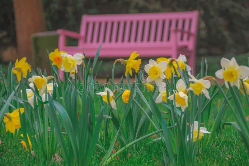 Fleurs de floraison sur le fond d'un banc rose images stock