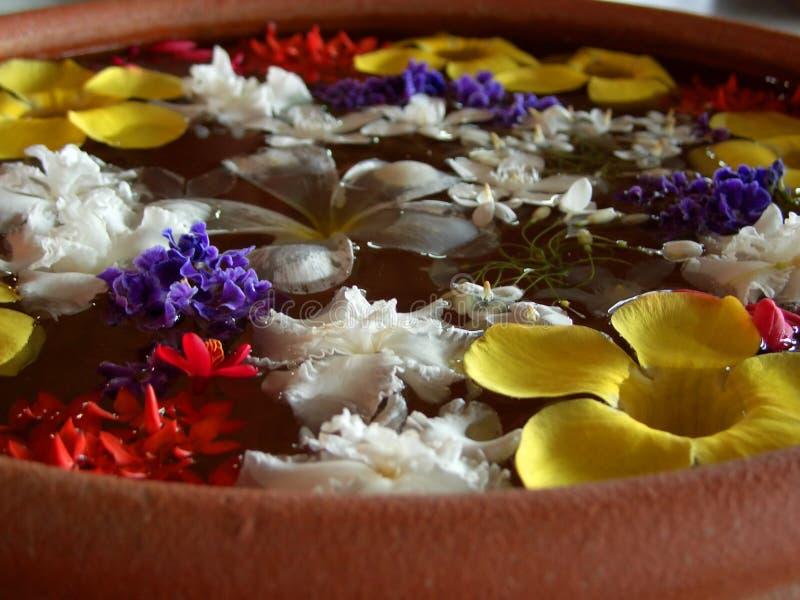Fleurs de flottement image stock