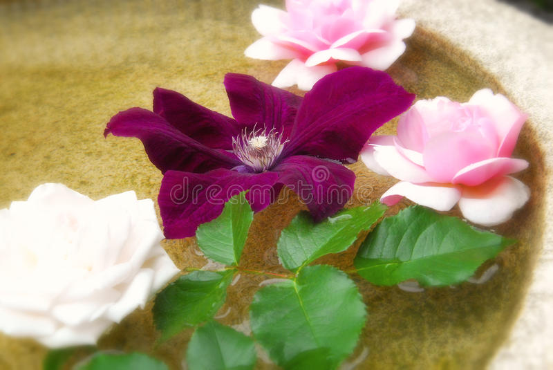 Fleurs de flottement photographie stock libre de droits