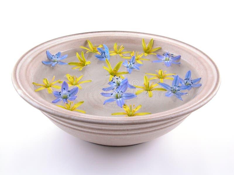 Fleurs de flottement de source images stock
