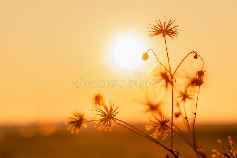 Fleurs de fond de nature dedans sur le coucher du soleil orange photos stock